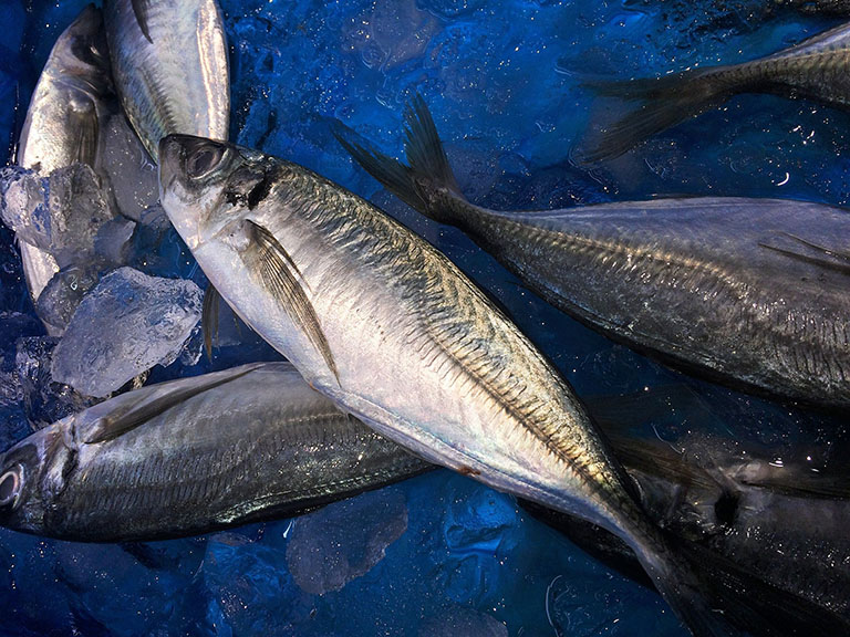 Picture of Horse Mackerel