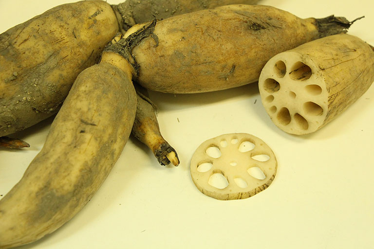Picture of Lotus Root