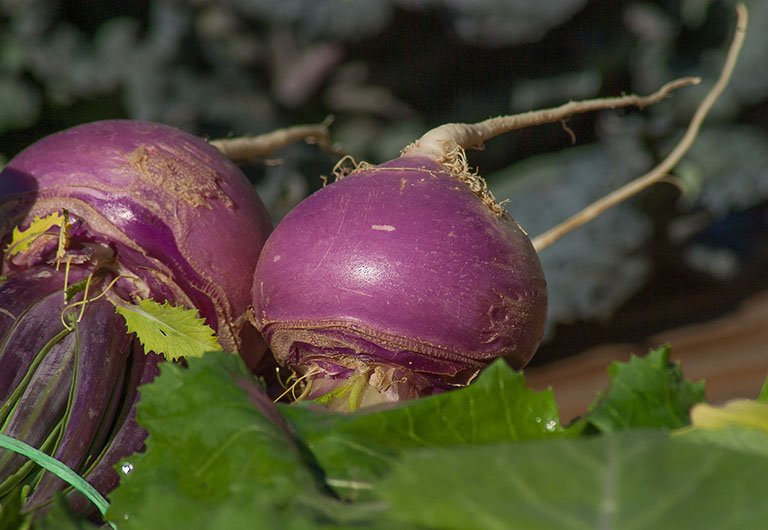 Picture of Turnip